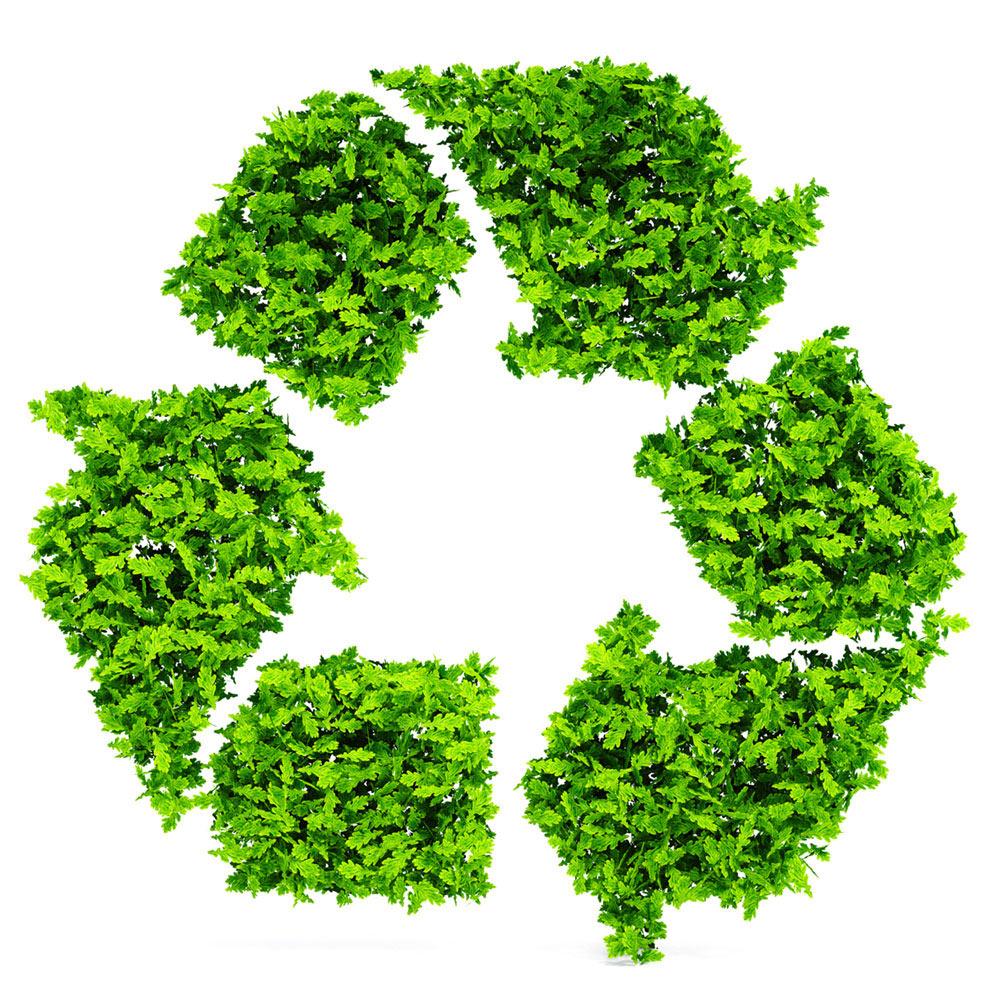 Foglie, logo Ecologica