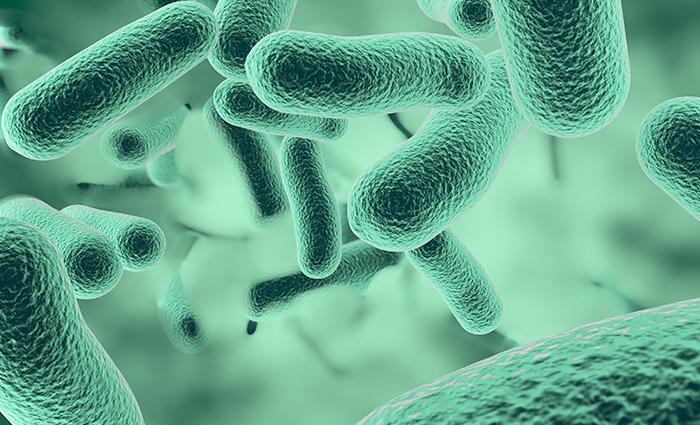 Derattizzazione - portatori di parassiti e di agenti patogeni